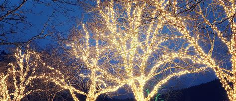 howto wrap christmas lights around tree branches how to properly wrap a tree with lights lights houston