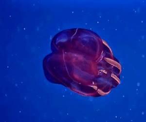 deep sea fish GIFs Search | Find, Make & Share Gfycat GIFs