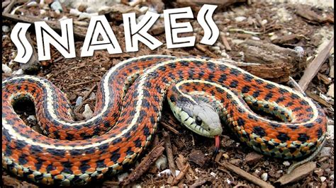 All About Snakes for Kids: Learn about Snakes for Children ...