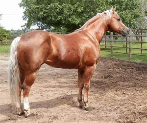 17 Best images about Palomino on Pinterest | Ponies ...