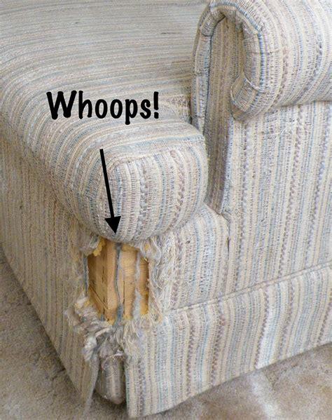 cats  scratching furniture smart behaviorists  answers natural cat care blog