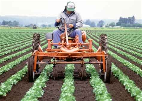 vegetable farm pictures how to start a vegetable farm open a business