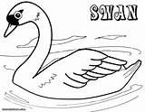 Swan Coloring Colorings sketch template