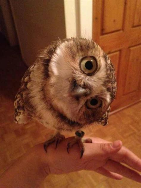 pictures    adorable owls  prepare