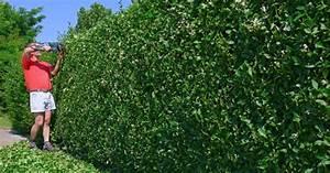 Quels Arbustes Pour Une Haie : comment choisir une haie de jardin node vocab 3 term ~ Premium-room.com Idées de Décoration