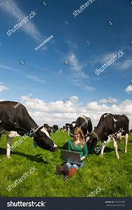 Young Blond Dutch Girl Farm Field Stock Photo 104531807 ...
