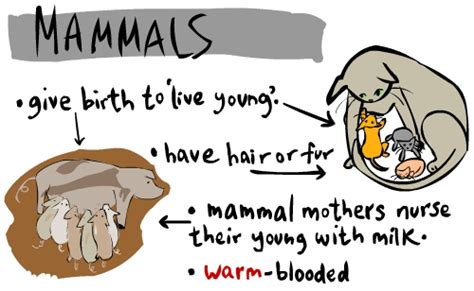 FSLOVENGLISH: ANIMAL CLASSIFICATION