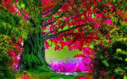 Spring Desktop Backgrounds Background Wide Tree