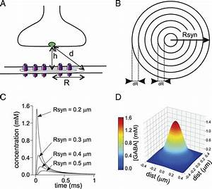 Model Simulation Of Gaba Diffusion In The Synaptic Cleft  A  Diagram Of