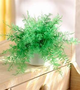 Plante Balcon Facile D Entretien : plante facile entretien plante d interieur facile ~ Melissatoandfro.com Idées de Décoration