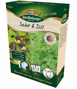 Dill Im Gewächshaus : anzuchtset 39 salat dill 39 dillsamen bei baldur garten ~ Whattoseeinmadrid.com Haus und Dekorationen
