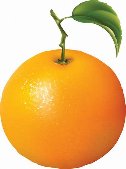 Orange Clipart Naranja Oranges Fruit Transparent Imagen