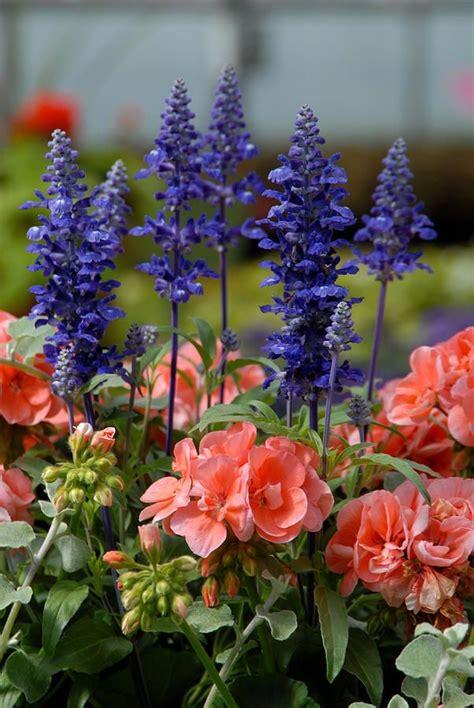 Best Images About Flower Garden Ideas Pinterest
