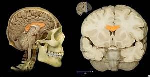 Yin Yang Qigong  Brain Balancing