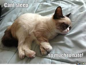 Grumpy Sleepy Cat by harrysmemes - Meme Center