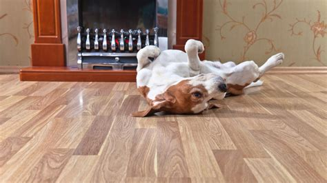 best hardwood floors for dogs what is the best flooring for dogs and other house pets 7704