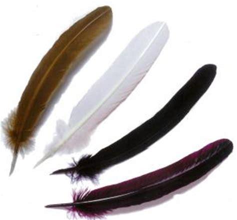 plume d oiseau dessin plumes d oiseau