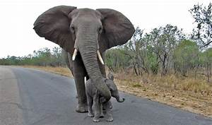 Video: Mother elephant teaches baby not to talk to ...