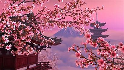 Blossom Cherry Japanese Desktop Wallpapers Coral Reef