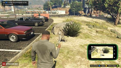 wildlife photography challenge  gta  gta guide