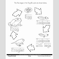Life Cycle Worksheets  1st Grade Science Stages In The Life Cycle  Life Science K Pinterest
