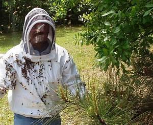 Was Hält Wespen Fern : wespennest entfernen hornissennest beseitigen bzw umsiedeln ~ Whattoseeinmadrid.com Haus und Dekorationen