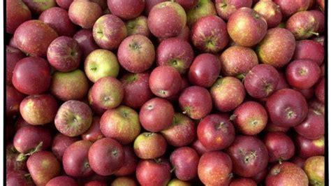 Pille Giver Sæd Med æblesmag