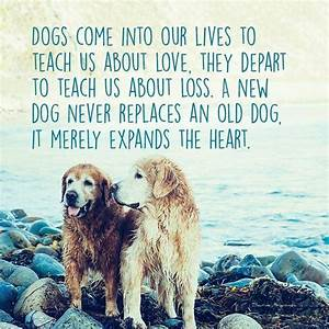 Our dog teaches love, their departure teaches loss, a new ...