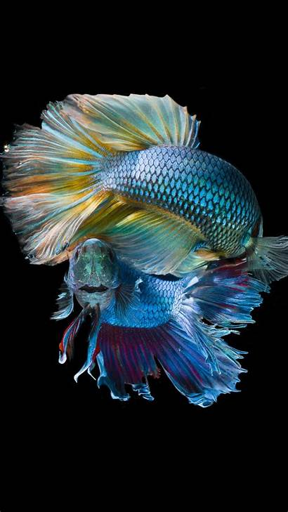 Fish Underwater Dark Iphone 5k Wallpapers Minimal