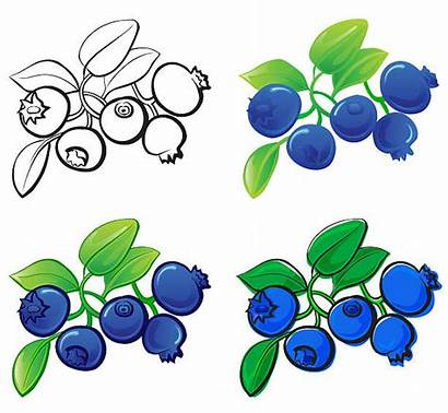 Blueberry Blueberries Vector Berry Clipart Drawings Illustration