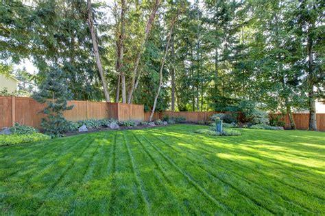 fenced in backyard hydroseeding a lawn landscaping network