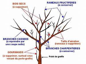 Taille De Cerisier : arbres fruitiers taille des arbres fruitiers ~ Melissatoandfro.com Idées de Décoration
