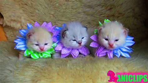 Super Cute Kitten Videos Compilation Youtube