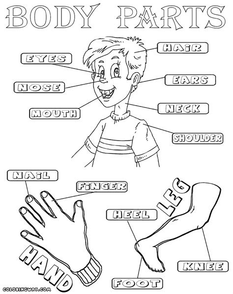 body parts coloring pages coloring pages