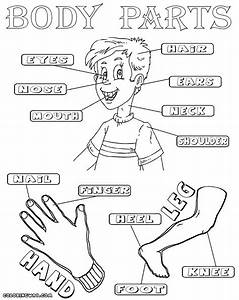 Body parts coloring pages | Coloring pages to download and ...