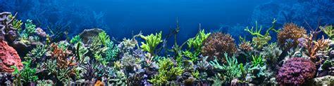 marine plants  invertebrates jacksonville fl