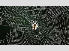 Un violín con cuerdas de seda de araña ABCes