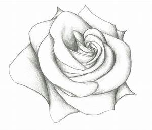 Roses Drawings In Pencil Step By Step Rose Pencil Drawing ...