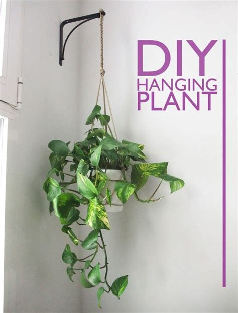 Best Plants For Bathroom Without Window by 25 Best Ideas About Hanging Plants On Diy