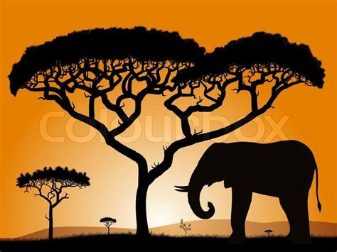 Savannah Tree Silhouette Pictures To Pin On Pinterest