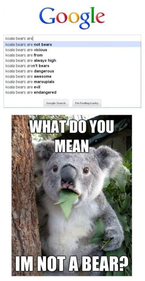High Koala Meme - 65 best images about koala s best friends on pinterest cute pictures zoos and australia