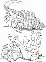 Crab Coloring Pages Hermit Animals Sea Printable Animal Crabs Sheets Adult Drawing Colouring Dessin Mer Coloriage Shell Coral Creatures Patterns sketch template