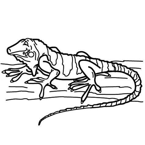 Coloring Iguana by Iguana Coloring Animals Town Animals Color Sheet