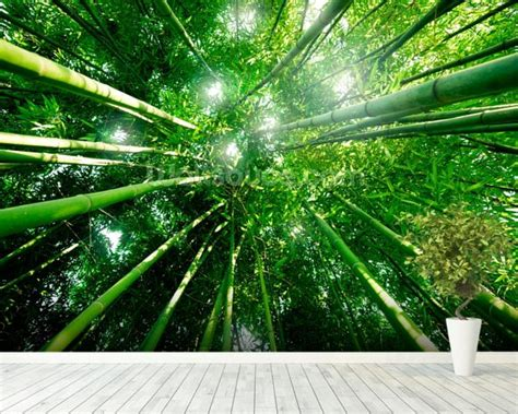 bamboo forest wallpaper wall mural wallsauce australia