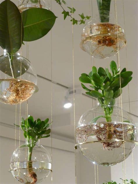 Best 25+ Water Plants Indoor Ideas On Pinterest Water
