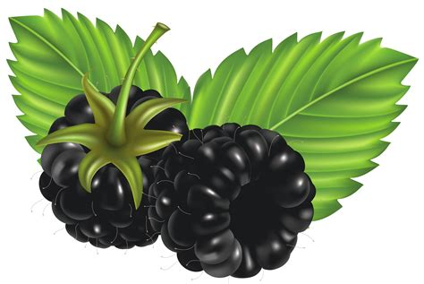 clipart vector free blackberries cliparts free clip free