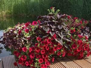 Balkon Ideen Sommer : rote pflanzen f r den balkon zimmerpflanzen balkon terrasse pinterest balkon ~ Markanthonyermac.com Haus und Dekorationen