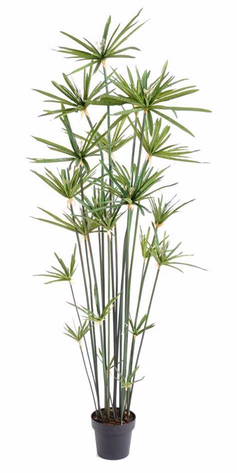 planter un papyrus en pot plante artificielle papyrus alternifolius en pot int 233 rieur h 180 cm vert