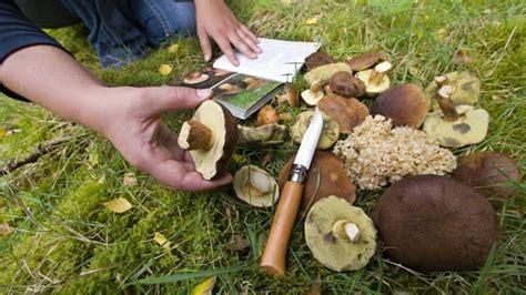 Weisse Längliche Pilze Im Garten by Pilzvergiftungen Vermeiden So Erkennen Und Bestimmen Sie