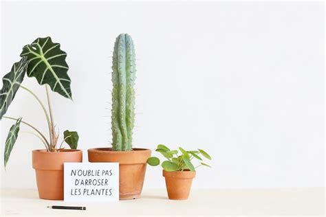 comment bien arroser ses plantes mademoiselle claudine le